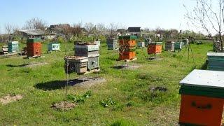 Пчеловодство как бизнес,теория на практике, пасека