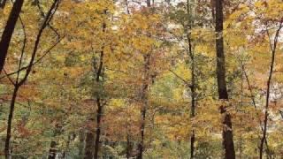 Ragged Wood- Fleet Foxes