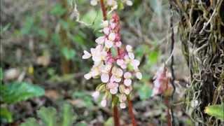 preview picture of video 'Orchid garden Orquideario in Parque Natural Jardin del Pinar Cuba'