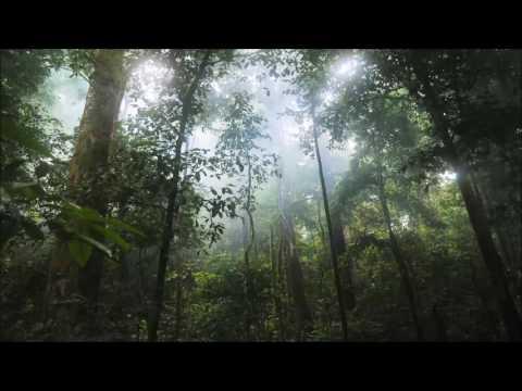 Ambiente & Natur: Regenwald (Rain Forrest) [Meditation, Entspannung]