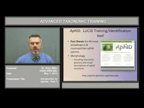 Video Introduction to aphids, part 1