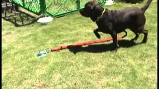 大型犬用フレペグFlepeg強力ドックポール、係留ポール、ドックスティ動画