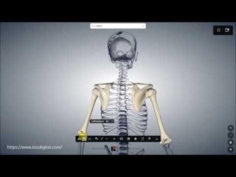 Wunde linke Hüfte und die untere Rücken
