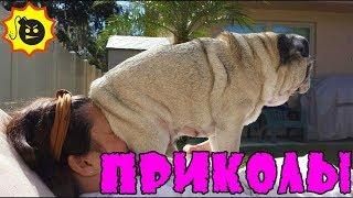 Приколы с животными 2018 Угарные и Смешные Видео Про Собак и Кошек Смешные животные 2018 Funny Pets