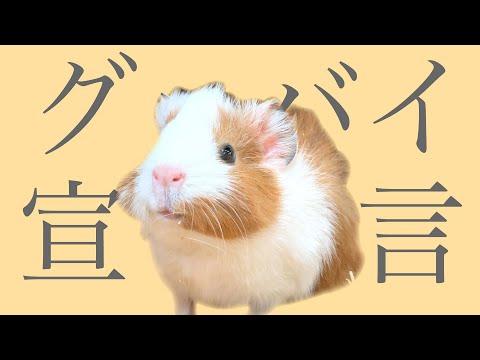 """グッバイ宣言歌ってみた/プイプイ Guinea pig sing """"Good-bye Sengen"""""""