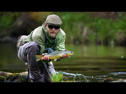 One Trout