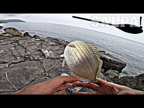 Russo che pesca in 3.7 pesce rosso