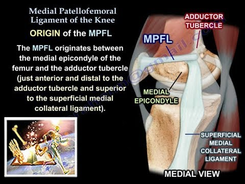 Medial Patellofemoral Ligament Of The Knee Anatomy Everything You