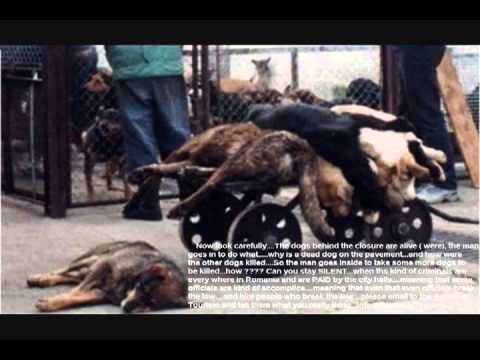 Help Stop Dog Abuse In Romania