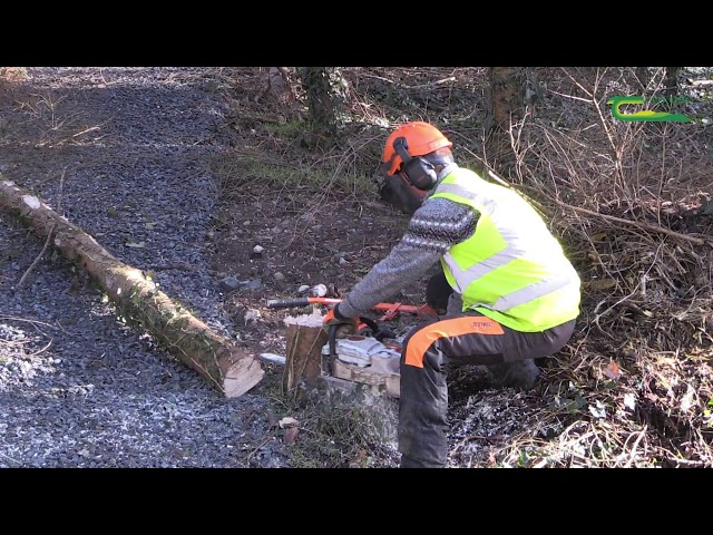 Forestry Education -
