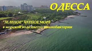 В Одессе позеленело море (видео)