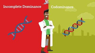 Genetics Basics: Difference Between Codominance And Incomplete Dominance