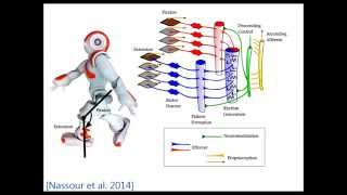 Multi-Layered Multi-Pattern Central Pattern Generator for Adaptive Locomotion of Humanoid Robots