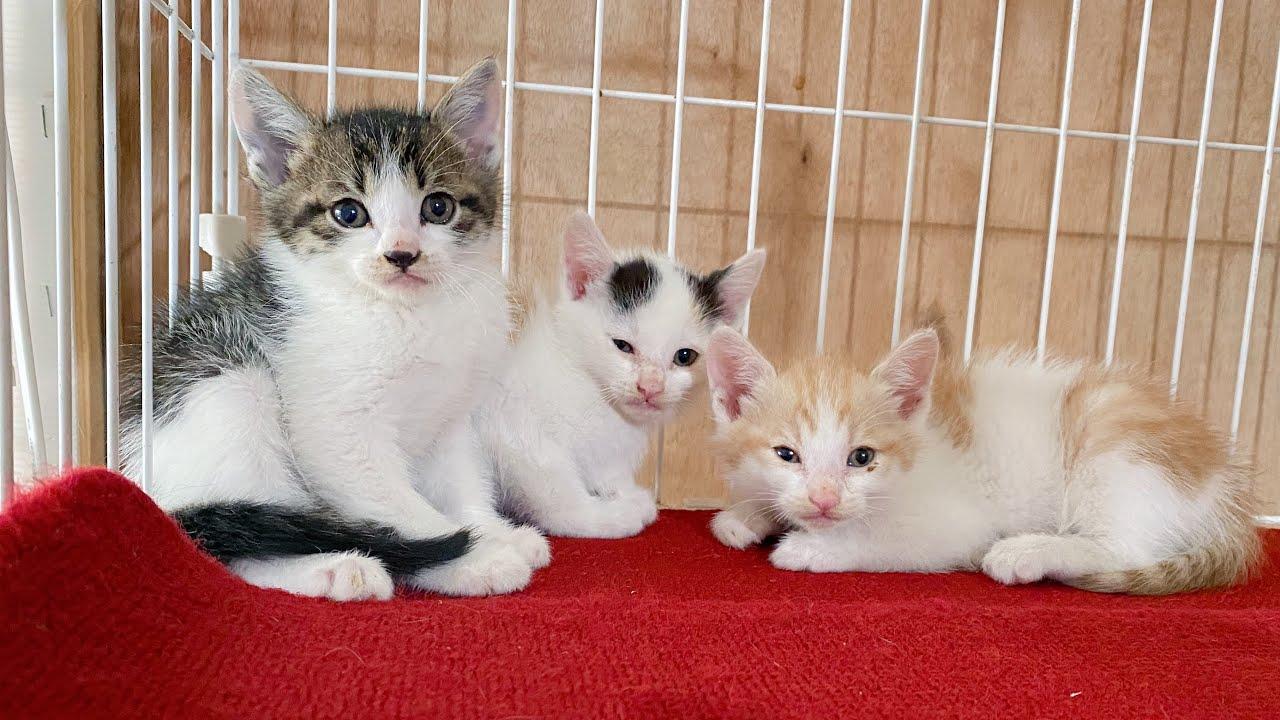 【保護子猫】2020年5月23日のヒビネコシェルター【保護猫】