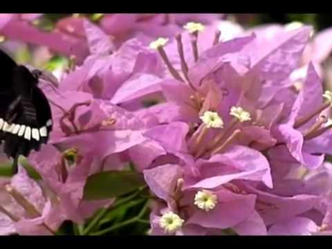 バタフライファームの蝶