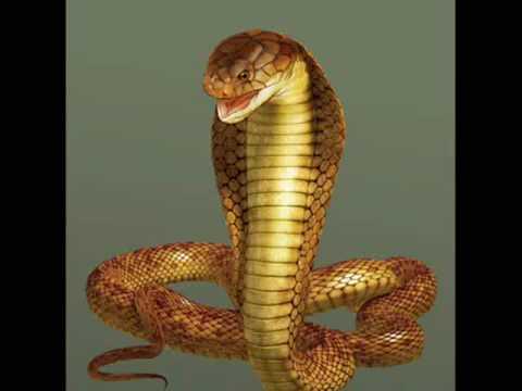 Cosa buongiorno ma il cobra un serpente yahoo answers - Serpente collegare i punti ...