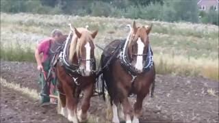 Pferdetag Lensahn 2016