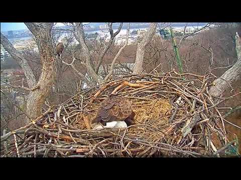 NOW: A baby eagle is about to hatch! Here's a look at the Liberty and Justice eagle cam