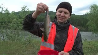 Рыбалка в зеленогорске красноярский край
