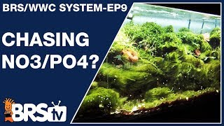 What nitrate and phosphate level is right for a healthy reef tank? - The BRS/WWC System Ep9 - BRStv
