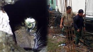 Atan Bintang, Nama Harimau Sumatera yang Terjebak di Kolong Ruko