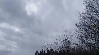 Музыка ветра, птиц и уходящей осени.