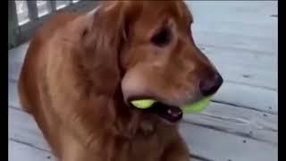 Приколы с собаками  Приколы про животных  Приколы с животными  Fun with dogs  Jokes about