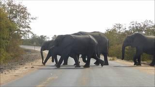 TaNaturo en Afrique du Sud