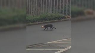 Un chat qui a du mal a trouver son chemin ! adoptez via la spa pour que ça cesse ✅