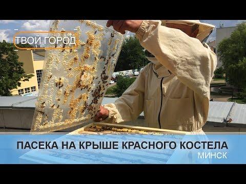 Городское пчеловодство. ТВОЙ ГОРОД