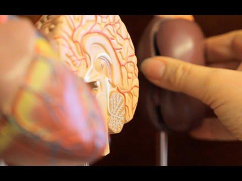 Bei disbakteriose tut das Unterteil des Bauches und die Lende weh