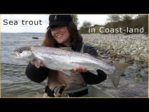 Fly Fishing Sea trout  in Coast-Land