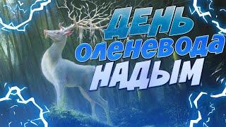 Праздник Оленеводов Надым