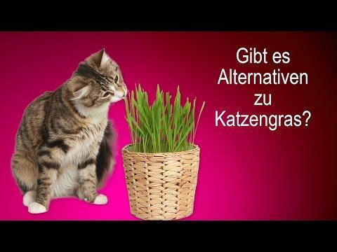Gibt es eine Alternative zu Katzengras?