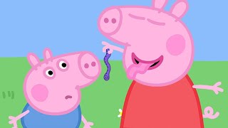 Peppa Pig Official Channel | Peppa Pig and the Wriggly Worm!