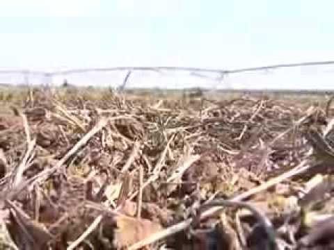 Nuevas herramientas biológicas para el control de hongos de suelo (#527 2013-08-31)