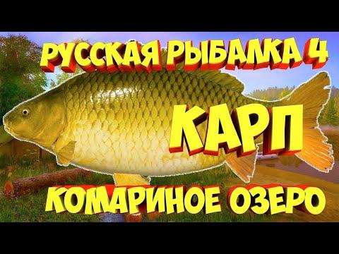 Карп озеро Комариное