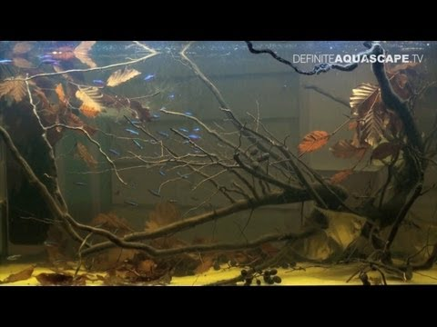 Aquascaping - Best biotope aquariums of ZooBotnica 2012