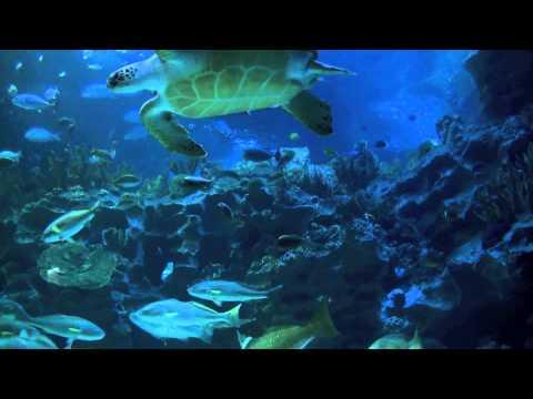 Aquarium 2hr relax music