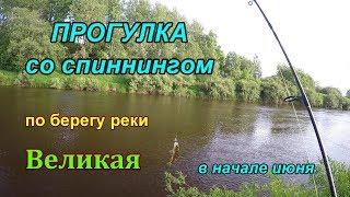 Ловля хищника на реке великой в пскове