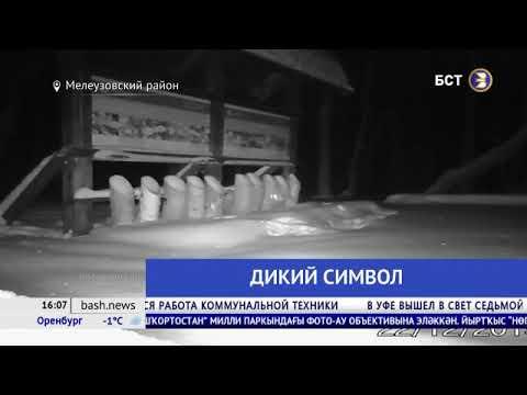 В Башкирии в фотоловушку попала дикая куница