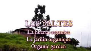 Création du jardin organique - organic garden - huerta organica