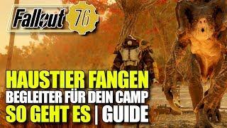 Haustier Zähmen und Fangen   Begleiter für dein CAMP Guide   Fallout 76