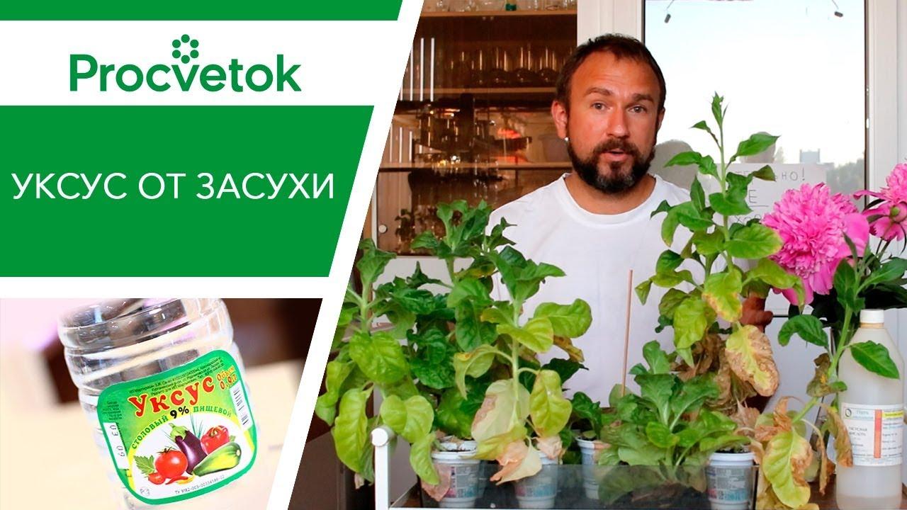 Уникальный способ полива томатов и огурцов. Подготовка растений к засушливой погоде.