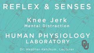 Knee Jerk Mental Distraction for Students | Reflex & Senses | Human Physiology | Dr. Ketchum