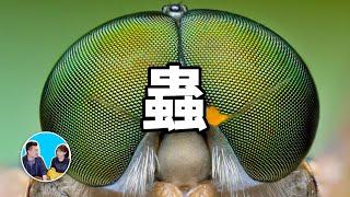 地球上最常見的外星人,蟲 | 老高與小茉 Mr & Mrs Gao