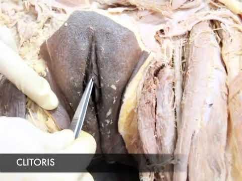 Cum se face intervenția chirurgicală de mărire a penisului