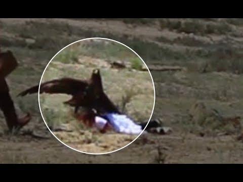 Беркут напал на 8-летнюю девочку на берегу озера Иссык-Куль в Киргизии