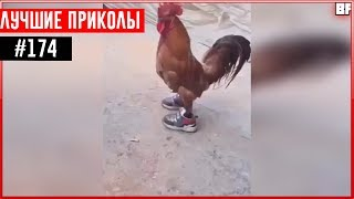 ПРИКОЛЫ 2017 Ноябрь #174 ржака до слез угар прикол - ПРИКОЛЮХА