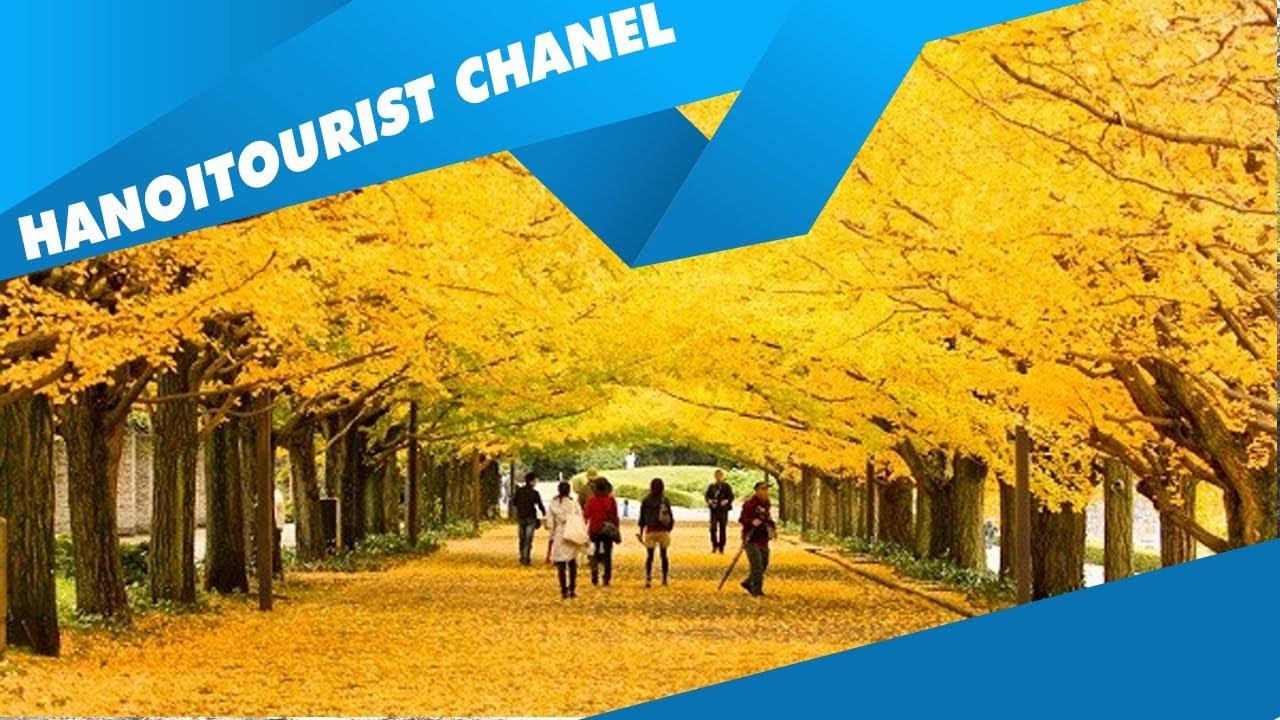 Du lịch Nhật Bản và Hàn Quốc mùa thu